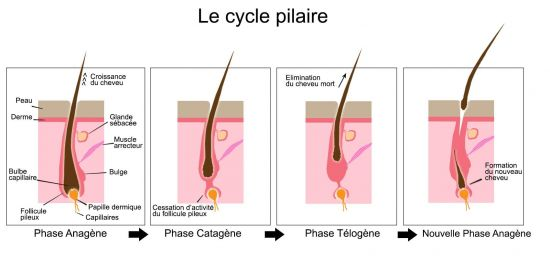 Cycle pilaire